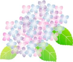olive_20150601